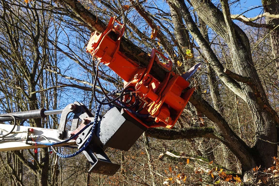 Der Fällgreifer umfasst und schneidet Bäume bis 45 cm Stammdurchmesser