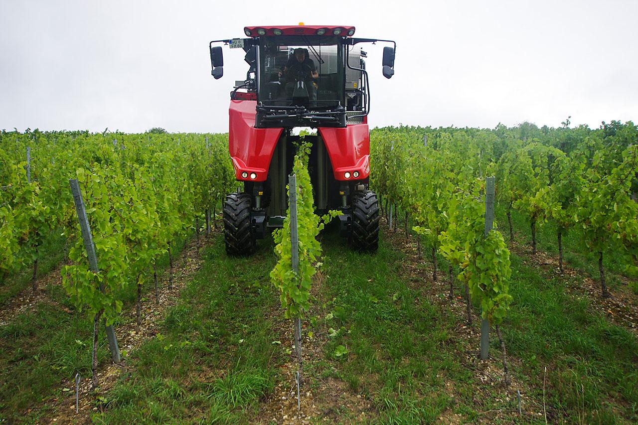 Maschinelle Weinlese mit dem Traubenvollernter