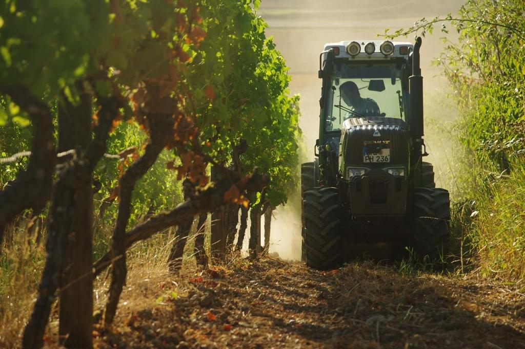 Maschinelle Bewirtschaftung des Weinbergs