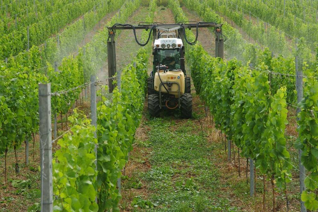Pflanzenschutz im Weinberg
